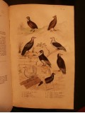 Oeuvres complètes de Buffon, avec les suppléments, augmentés de la classification de Cuvier, 9 tomes